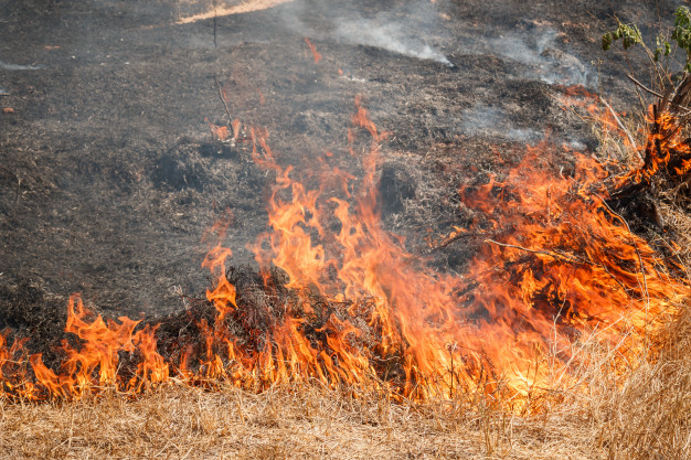 płonące trawy